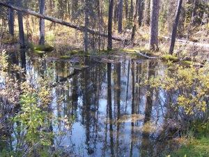 Along the trail to Watridge Lake